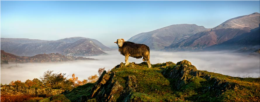 King of Cumbria - Canvas Print