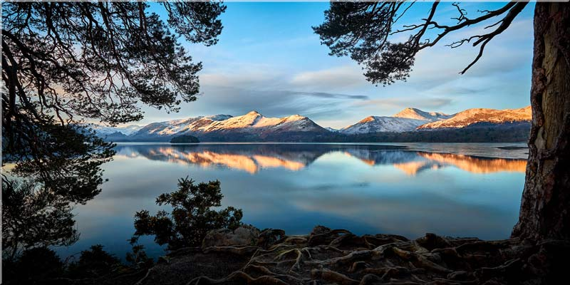 Roots and Mountains Derwent Water - Lake District Canvas Print