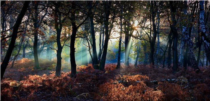 Sherwood Forest Beams - Canvas Print