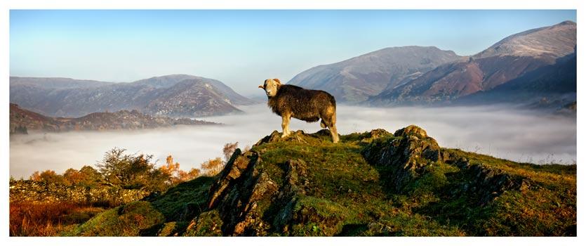 King of Cumbria - Lake District Poster