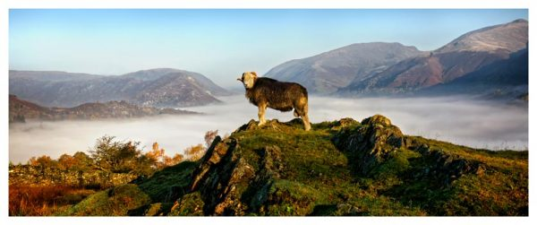 King of Cumbria - Lake District Print