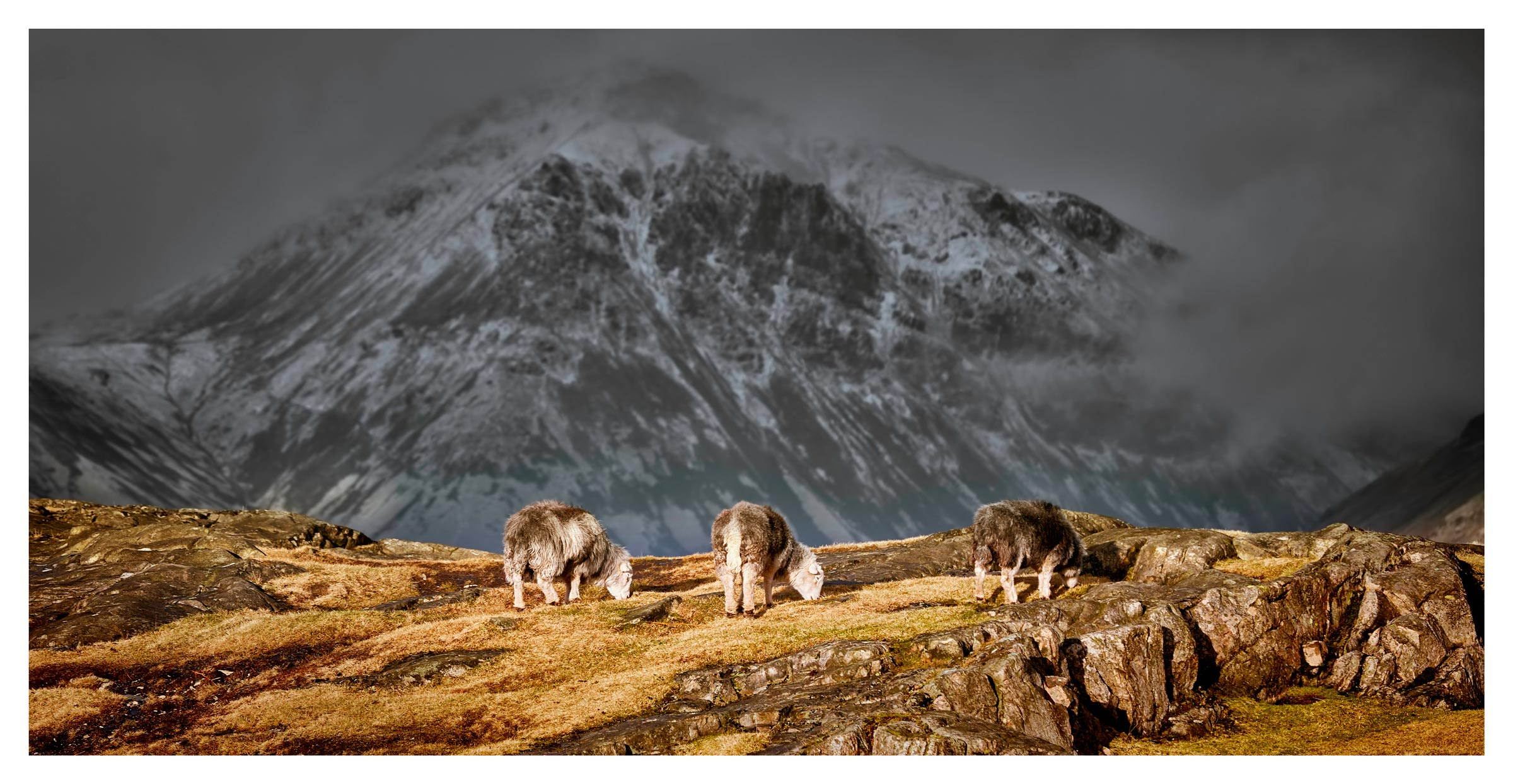 Three Sheep and a Mountain – Lake District Print
