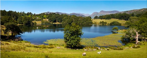 Loughrigg Tarn in Summer - Canvas Print