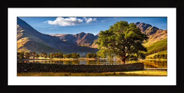 The Buttermere Oak Tree - Framed Print with Mount