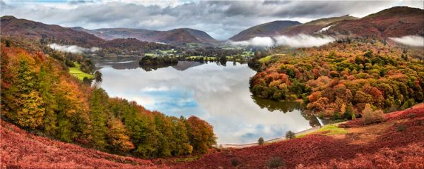 Trees of Grasmere - Canvas Print