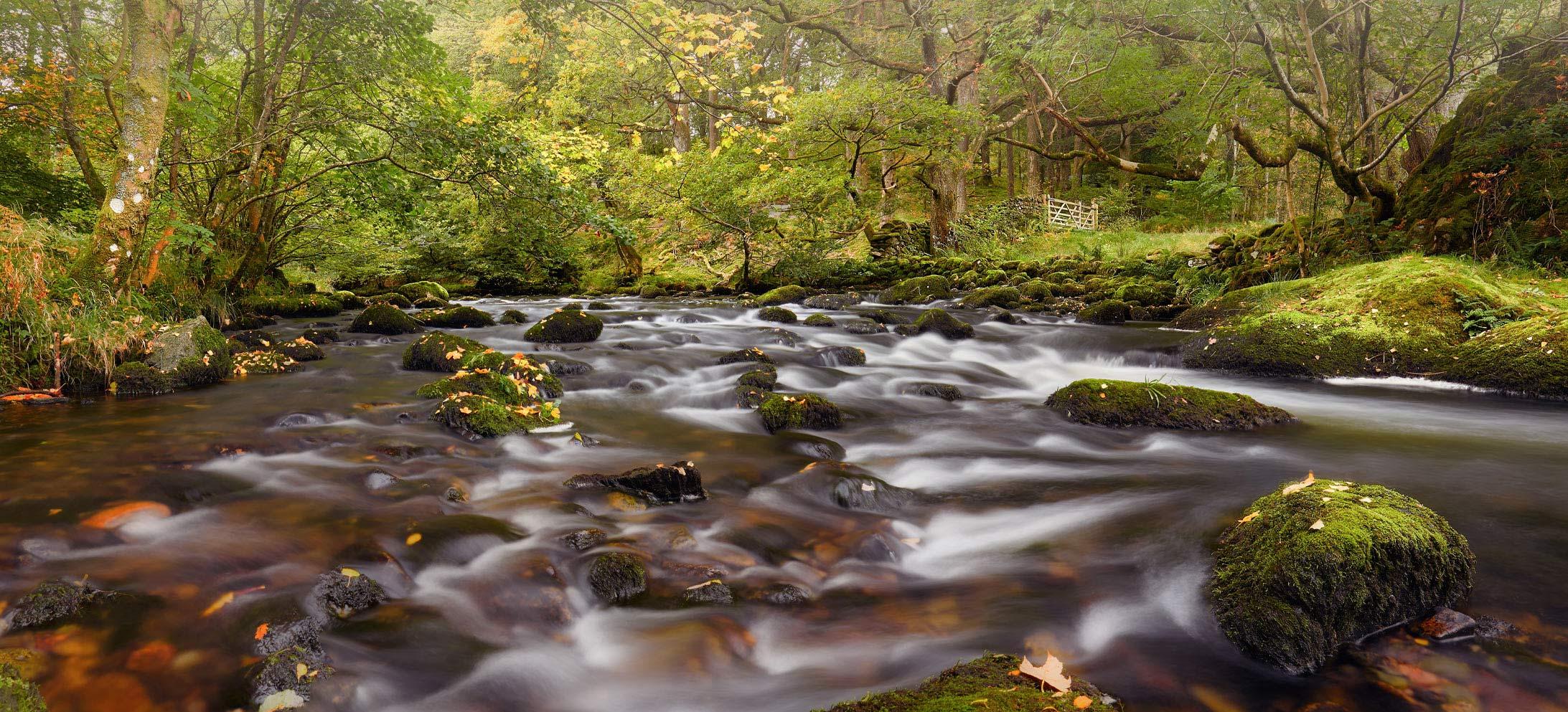 Start Autumn River Rothay Mug