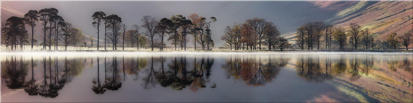 Buttermere Trees Silhouette - Canvas Print