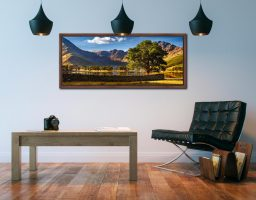 The Buttermere Oak Tree - Walnut floater frame with acrylic glazing on Wall