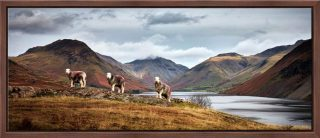 Three Sheep at Wast Water - Walnut floater frame with acrylic glazing on Wall