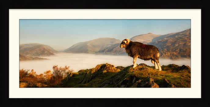 Ram at Gramere - Framed Print with Mount