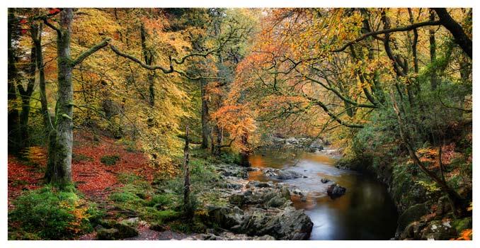 Autumn Woodlands of Eskdale - Lake District Print